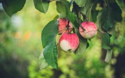 Fruit Trees: Disease and Insects